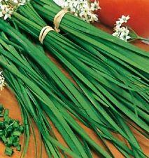 Seeds vegetable Bow fragrant. Perennial from Ukraine