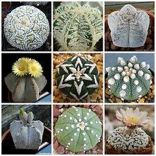 100 seeds of Astrophytum mix, cacti mix, succulents seeds mix R