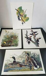 Audubon Birds of America Lot of 4 Prints Duck Woodpecker Sparrow Meadow Lark