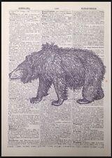 VINTAGE ORSO GRIZZLY Stampa pagina di dizionario Antico Wall Art ILLUSTRAZIONE PICTURE