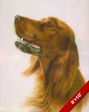 BROWN IRISH SETTER DOG ANIMAL PORTRAIT PAINTING ART REAL CANVAS PRINT