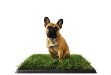 PottyBox® Regular - Lettiera in Erba 60x40 per cani