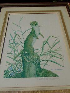 VINTAGE PATRICK A OXENHAM SIGNED LIMITED FRAMED PRINT  1970S weasels, polecats,