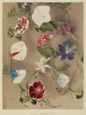 Ogawa Kazumasa Flowers 2 Japan 6x5 Inch Print