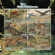 Guyana 2019 fauna  wildlife of South America ,jaguar ,bird I201901