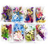 Random 1 Box Natural Dried Flower Dry Plants Real Flowers DIY Craft Accessori YK