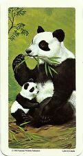 RED ROSE TEA CARD, SERIES: ANIMALS AND THEIR YOUNG, GIANT PANDA BEAR