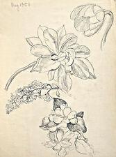 Dorothy Eaton Drawing (XXXVI) Botanical