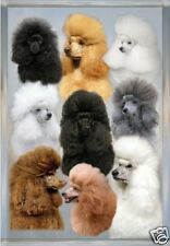 Poodle A6 Blank Card No 25 By Starprint
