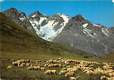 BR282 Alpage moutons sheep  france
