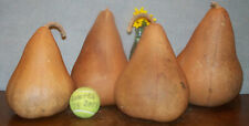 Four craft Gourds . with cracks . use for pretty painted / display pieces