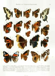 Set of 4 Vintage Butterfly Insect Papillon Painting Plate Art Print Posters #2