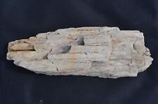 Bois fossile 1205g  France Wood fossil Cadeau Noel minéraux Rare