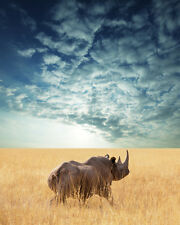 "African Rhino- Wildlife Animals Photo Art - Canvas Giclee Print 24"" x36"""