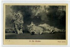 (Sc403-100)  Cats, In The Garden,unused ,Vg
