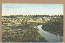 1909 A Kentucky Hemp Field by Stream KY PC