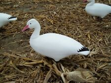 One  Dozen  Full Body Snow Goose Decoys W/ H-frame Stakes   $180.00
