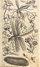 Libellule insecte fleur gravure de Henri Leroy (1579-1651) XVIIe Odonata Insecta