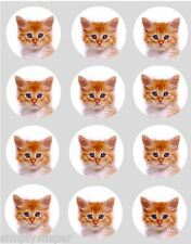 12 Ginger Kitten Cupcake Decoration Edible Rice Paper Cake Toppers Pre Cut Cat