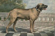 Antique Alexander Pope Jr Chromolithograph of English Mastiff Boston C.1880 RARE