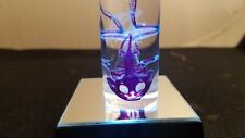 Real Pacman Horned Frog  Diaphonized / Clear & Stained Taxidermy  Skeleton Skull