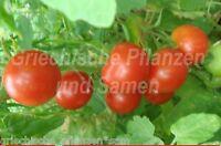 🔥 Riesentraube Tomate Cherry-Party-Rispen-Tomaten 10 frische Samen Balkon Kübel