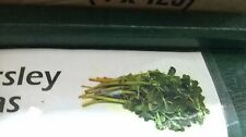 Mexican Parsley Verdolagas (25 Count plants bare roots)