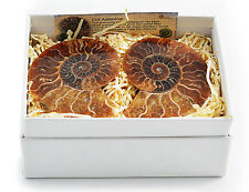 Pair of Boxed Ammonite Cut & Polished Large Fossil Fossils Gift Present