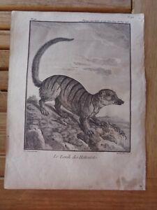 Der Zenik Der Hottentotten Gravur Extrahiert Aus Reise Mit Indien & China 1782