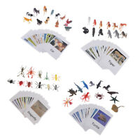 4 Set Insects Animals Model Card Montessori Toy Kids Matching Naming Card
