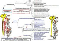 191 Mindmaps Ausbildung/Prüfung Heilpraktiker/medBerufe