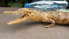 Petit crocodile alligator naturalisé empaillé gueule ouverte. Étrange, curiosité