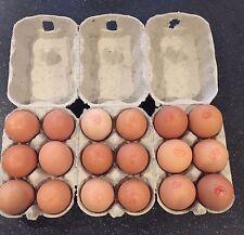 1200 x ½ DOZEN 1200 NEW GREY EGG CARTONS / EGG BOXES FOR DUCK/CHICKEN/HEN EGGS