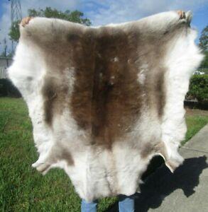 Beautiful Reindeer skin, Reindeer hide fur pelt, caribou # 43277