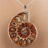 Hot Madagascar Sea Nautilus Ammonite Shell Chain Gemstone Pendant For Necklace