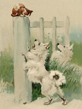 POMERANIAN SPITZ CHARMING DOG GREETINGS NOTE CARD TWO BEAUTIFUL DOGS AND CAT