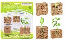 S662416 Safari Wissenschaft - Lebenszyklus einer Bohnenpflanze (Set)