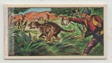 Cheetah Used For Hunting In India Large Cat Vintage Trade Ad Card