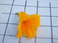 500 Daylilies daylily day lily Mini Stella Minnie stellas flower Hemerocallis