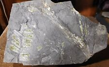 Fern Fossils-Pennsylvania-For your Garden Wall, Outdoor Living Area orCollection
