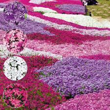 100Pcs Mixed Color Phlox Paniculata Seeds Hummingbird Flower Garden Decor Sturdy