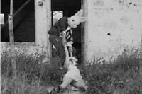 Vintage Bunny Man Photo 189 Oddleys Strange & Bizarre