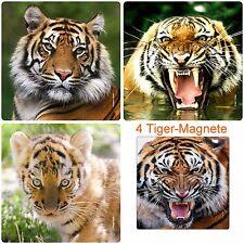 4-er Set Kühlschrank-Magnete TIGER Kühlschrankmagnete Tiere / Katzen 52 x 52 mm