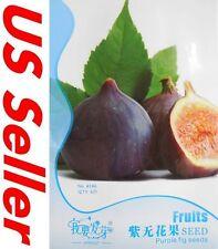 Purple Sweet Turkey Fig Seeds E111, 6 Seeds Ficus Carica Common Fig Honey Taste