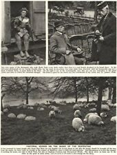 LONDON. Sheep on the Banks of the Serpentine. Park chair rental 1926 old print