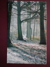 POSTCARD BUCKINGHAMSHIRE WENDOVER WOODS - A FROSTY MORNING