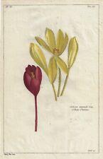 """By Buchoz Histoire   """"COLCHIQUE D'AUTOMNE""""   Hand-Colored Copper Engraving  1775"""