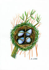 Scarlet Robin nest, eggs, Bird, Watercolor Original Painting Art, Quick sketch