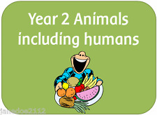 KS1 Y2 Science topic ANIMALS INCLUDING HUMANS teaching resources on CD