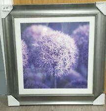 Purple Allium 63x63cm silver framed glazed picture